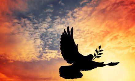El cuervo y la paloma